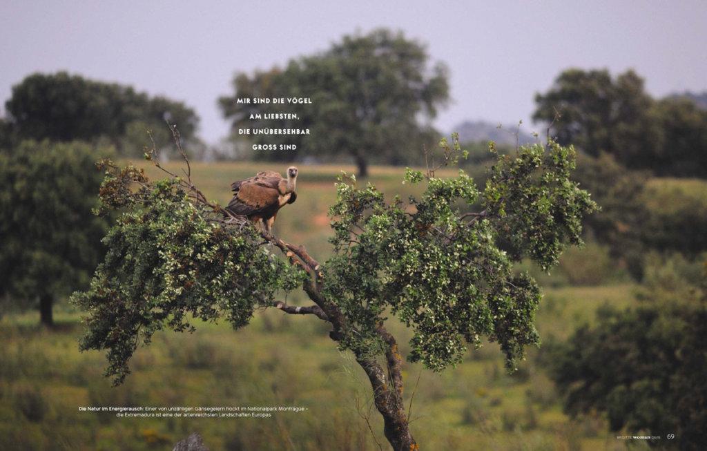 2 7 1024x653 - Birdwatching in der Extremadura