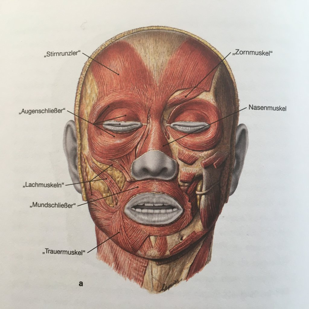 blog textett anatomie abbildung gesichtsmuskeln copyright elsevier verlag muenchen 1024x1024 - Post Grid -  Media Grid (Demo)