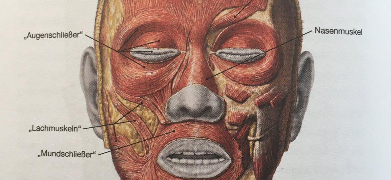 blog-textett-anatomie-abb-gesichtsmuskeln-copyright-elsevier-muenchen